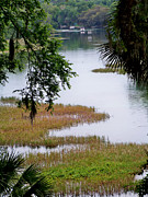 Dunnellon Photos - The Rainbow River  4 by Judy Wanamaker