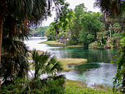 Dunnellon Framed Prints - The Rainbow River Framed Print by Judy Wanamaker