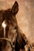 Horse Photography Prints - The Ranch Horse Print by Christine Hauber