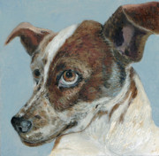 Fine Art - Animals Originals - The Rascal by Enzie Shahmiri