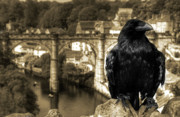 Yorkshire Bridge Framed Prints - The Raven of Knareborough Castle Framed Print by Rob Hawkins
