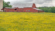 Buttercups Prints - The Red Barn Print by JC Findley