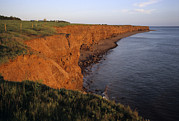 Farms Art - The Red Cliffs Of Prince Edward Island by Taylor S. Kennedy