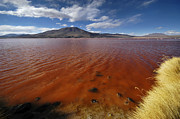South America Photos - The red lagoon. South Lipez. Republic of Bolivia.  by Eric Bauer