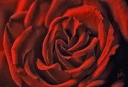 Op Art Photo Posters - The Red Rose Poster by H Scott Cushing