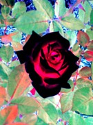 Dozen Red Roses Posters - The Red Rose That Glows Poster by Annie Zeno