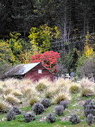 Shed Photo Prints - The Red Shed Print by Karen Lewis
