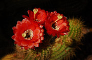 Red Flowers Art - The Red Trio  by Saija  Lehtonen