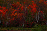 Fall Colors Art - The Reds Have It by Marjorie Imbeau