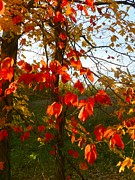 Julie Riker Dant Photos Posters - The Reds of Autumn Poster by Julie Dant