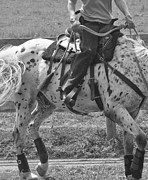 Dressage Photos - The Rein Back by East Coast Barrier Islands Betsy A Cutler