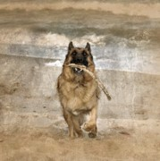 Dog Photos Posters - The Retrieve Poster by Angie McKenzie