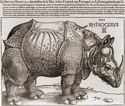 Northern Renaissance Framed Prints - The Rhinoceros, Woodcut By Albrecht Framed Print by Everett