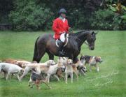 Terry Kirkland Cook - The Rider and The Hounds