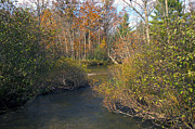 Woods Photos - The River in Fall by Sheryl Thomas