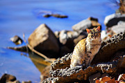 Photography Of Black Cats Photos - The River Life 1 of 3 by Jason Politte