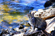 Photography Of Black Cats Photos - The River Life 2 of 3 by Jason Politte