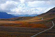 Denali National Park Prints - The Road to the Great One Print by Alan Lenk