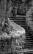 Tree Roots Art Giclee Framed Prints - The Rock Stairway in BW Framed Print by Laurinda Bowling