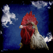 Rooster Photos - The Rooster by Ernie Echols