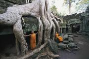 Temples Photos - The Roots Of A Strangler Fig Creep by Paul Chesley