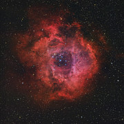Star Clusters Posters - The Rosette Nebula Poster by Rolf Geissinger
