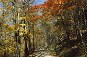 National Recreation Areas Prints - The Roy Gap Road Trail Print by Raymond Gehman