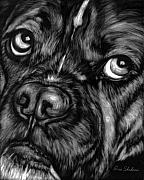 Pet Portraits Acrylic Prints - The Sad Boxer by Enzie Shahmiri