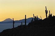 Highlands Photos - The Salar de Uyuni and silhouettes of cactus. Republic of Bolivia. by Eric Bauer