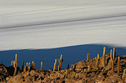 Cactus Photos - The Salar de Uyuni. Republic of Bolivia. by Eric Bauer