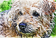 Playful Dog Prints - The Scruffiest Dog In The World Print by Meirion Matthias