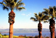 Sermon Posters - The Sea of Galilee from the Mount of the Beatitudes Poster by Thomas R Fletcher