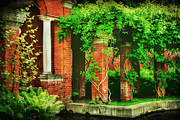 Vine Leaves Framed Prints - The Secret Garden Framed Print by Darren Fisher