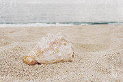 Beach Photographs Digital Art Posters - The Secret Heart of Time Poster by Sharon Mau