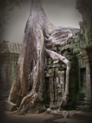 Tree Roots Framed Prints - The Secrets of Angkor Framed Print by Eena Bo
