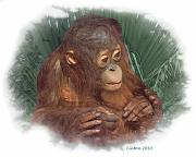 Orangutan Digital Art Framed Prints - The Security Of A Mothers Hands Framed Print by Larry Linton