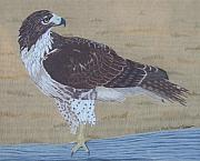 Red-tailed Hawk Paintings - The Sentinel by Anita Putman