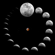 Gibbous Moon Posters - The Sequence Of A Total Lunar Eclipse Poster by Miguel Claro