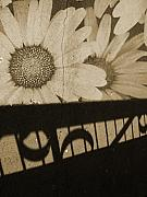 Aging Photos - The Shadow Flowers by Tara Turner