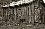 Shed Photo Prints - The Shed sepia Print by Steve Harrington