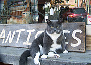 Store Fronts Prints - The Shop Cat Print by Tam Ishmael - Eizman