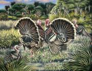 Florida Wild Turkey Prints - The Showoffs Print by Monica Turner