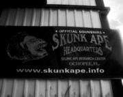 Ape Photo Posters - The Skunk Ape Poster by David Lee Thompson