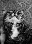 Monochrome Photos - The Smiling Cat by Nadya Ost