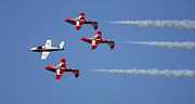 Aerobatics Framed Prints - The Snowbirds Playing It Cool Framed Print by Bob Christopher