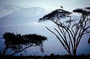 Kenya Photos - The Snows of Kilamanjaro by Carl Purcell
