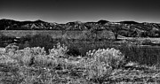 Flood Prints - The South Platte Park Landscape II Print by David Patterson