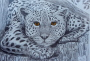 Big Cat Pastels Posters - The Spotted Stalker Poster by Nancy Rucker