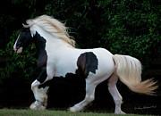 Terry Kirkland Cook - The Stallion As Art