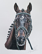 Dressage Horse Originals - The Stallion Don Principe  by Terry Kirkland Cook